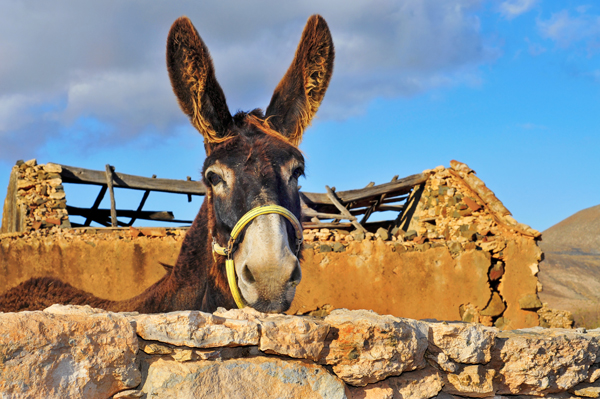 Donkey Leadership Story – Purpose of a Team