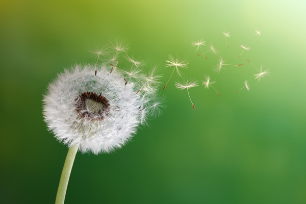 Make a Wish – Gifts and Talents
