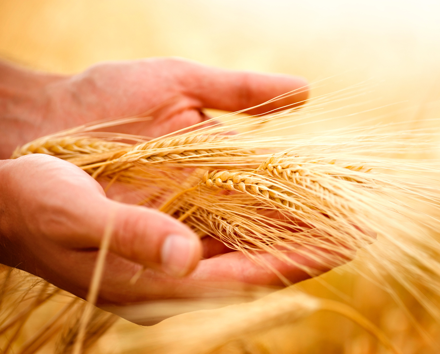 Law of the Harvest – You Reap What You Sow – Happiness and Productivity