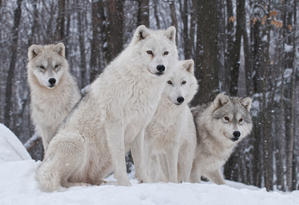 What Pack Animals Can Teach You About Leadership post image