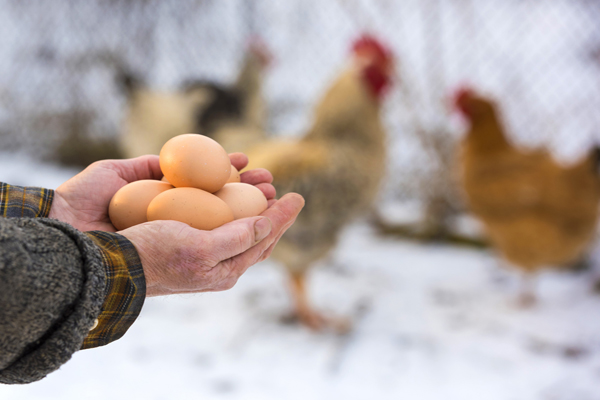 Teamwork Video and Chickens and Eggs