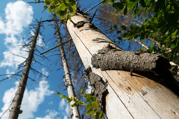 Leadership Story of Dying Tree – Leaders – It is About the Small Things
